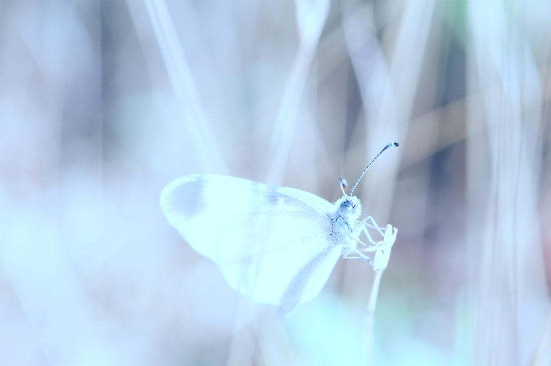 comunicazione insetti ispirazioni entomologia