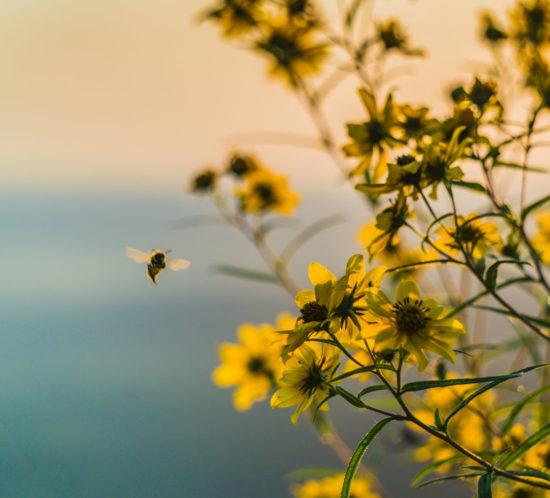 gli insetti vincono sempre - la comunicazione delle api